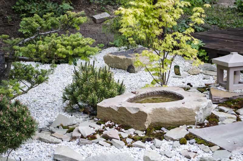 Skalniak ogrodowy z roślinami