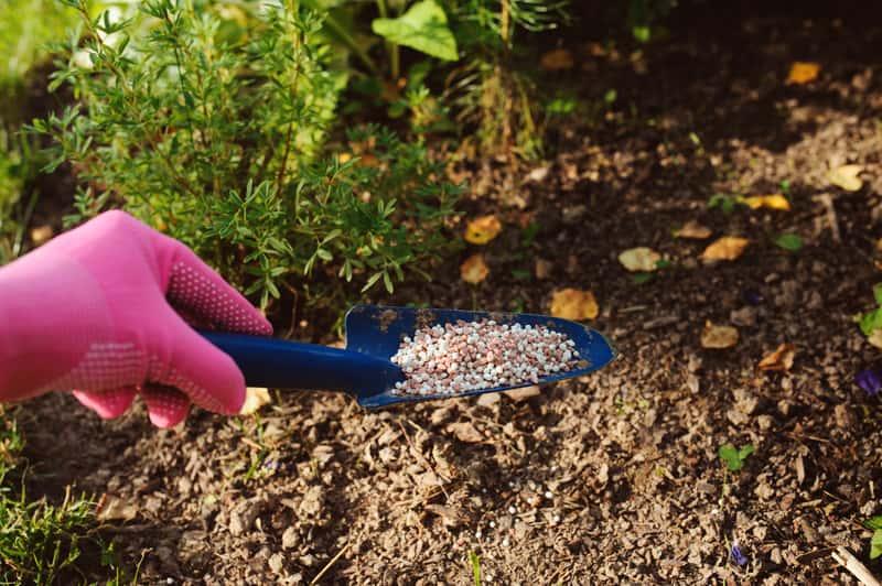 Nawożenie roślin w ogrodzie