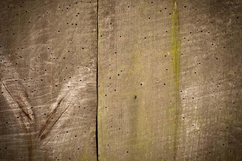 Szkodniki drewna - sprawdzone sposoby na ich zwalczanie