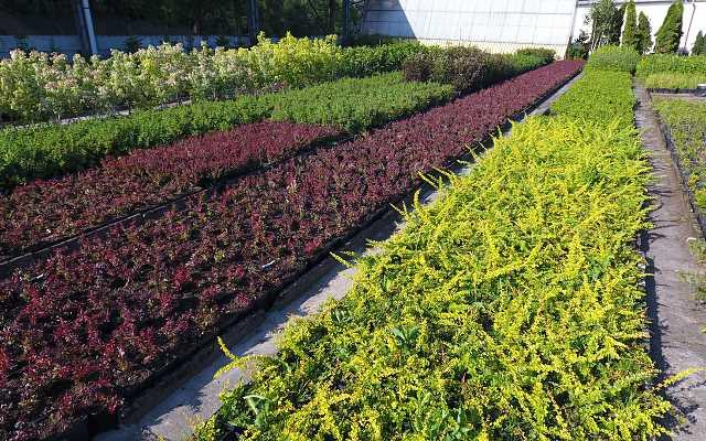 Szkółki roślin ogrodowych - zalety roślin z dobrej hodowli