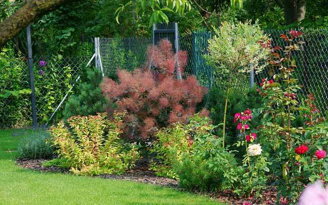 Tawuła - odmiany, sposoby pielęgnacji i uprawy krzewu ozdobnego