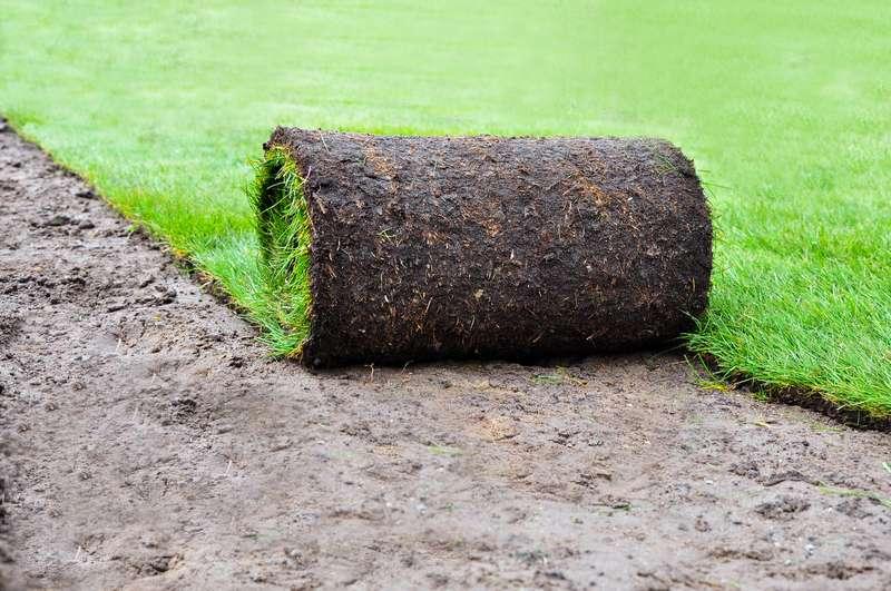 Trawa z rolki rozwijana w ogrodzie