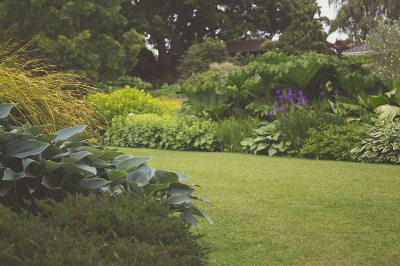 odwodniony ogród to gwarancja prawidłowego wzrostu roślin