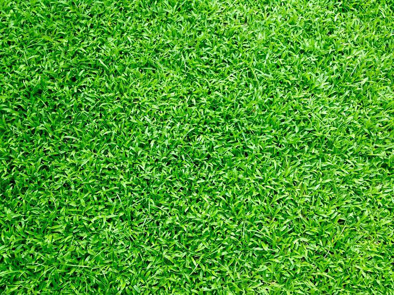 Tło - trawa