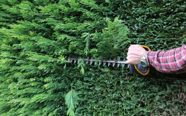 Tuje na żywopłot - które tuje wybrać do ogrodu?