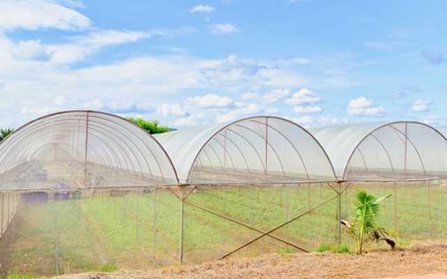 Foliowy tunel ogrodniczy – jak wybrać najlepszy model?