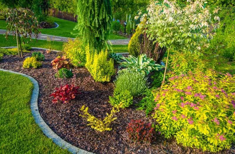 Wierzba karłowata w ogrodzie pełnym drzewek i roślin ozdobnych. Pielęgnacja wierzby karłowatej nie należy do trudnych