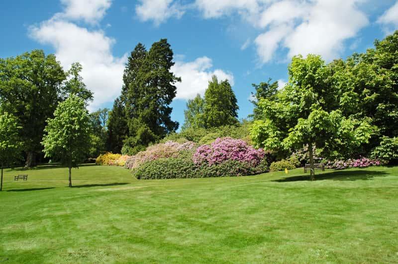 Wierzba sachalińska, zwana też sekka w ogrodzie wśród innych drzew, krzewów i roślin ozdobnych