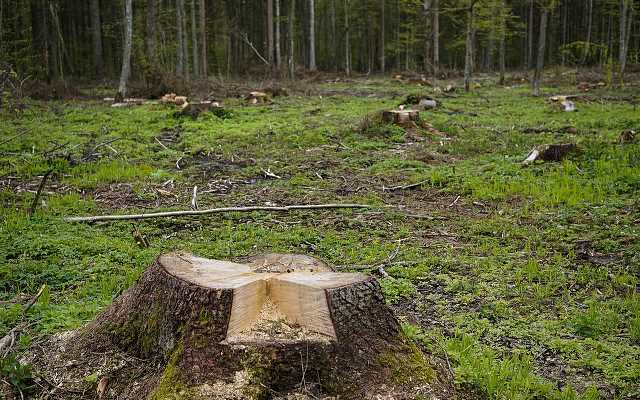 Wycinka drzew na własnej działce – przepisy 2019 i koszty