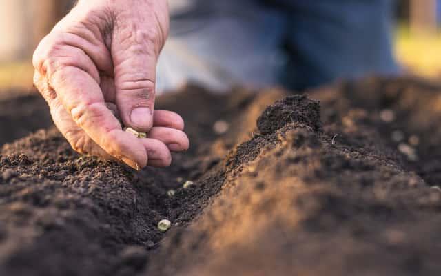 Wysiew warzyw krok po kroku - fasolka, buraki, ogórki i inne warzywa