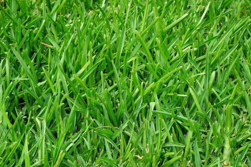 Zakładanie i pielęgnacja trawnika - porady eksperta