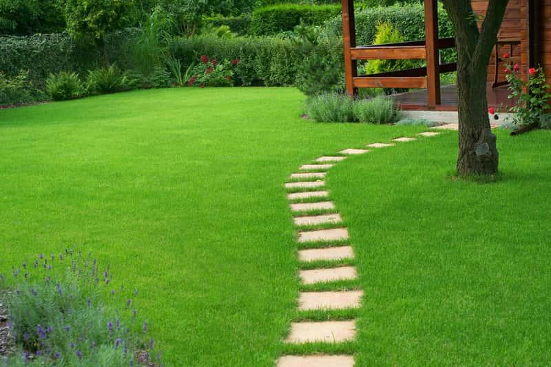 Piękny zielony trawnik w ogrodzie