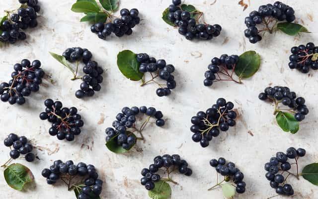 Kiedy zbierać aronię? Sprawdzamy najlepsze terminy na zrywanie owoców aronii?