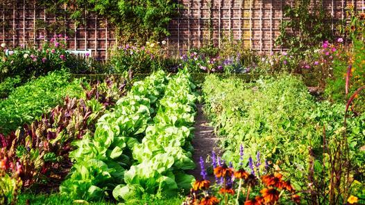 Sąsiedztwo warzyw w ogródku - co koło czego? Poradnik