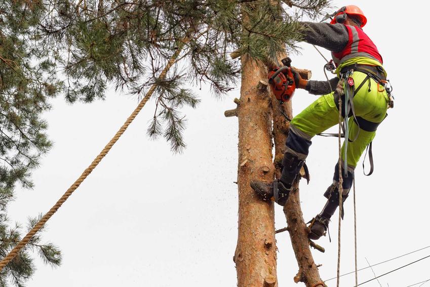 Wycinka drzew jest dopuszczona prawnie, jednak trzeba mieć zezwolenie. Wycinką drzew powinni zająć się specjaliści.