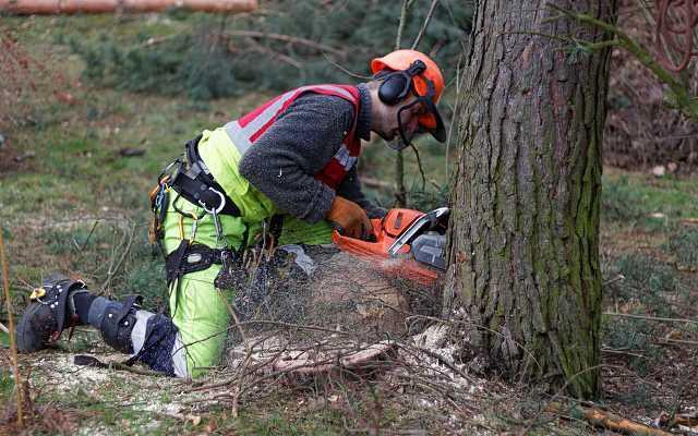 Mężczyzna prowadzący wycinkę drzew, a także wycinka drzew od 2017 roku, czyli pozwolenia, zasady, koszt