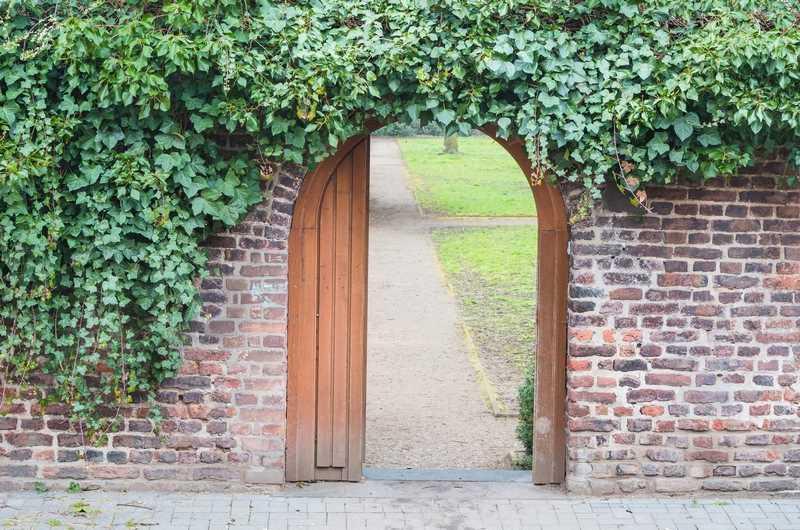 Brama porośnięta bluszczem pospolitym, czyli gatunki i odmiany bluszczu oraz sadzenie, uprawa, stanowisko i pielęgnacja