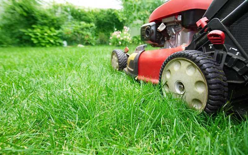Wertykulacja trawnika za pomocą wertykulatora, a także informacje, jak przeprowadzić wertykulację, zabieg, wady i zalety