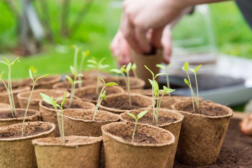 Sadzenie i uprawa pomidorów – co warto wiedzieć