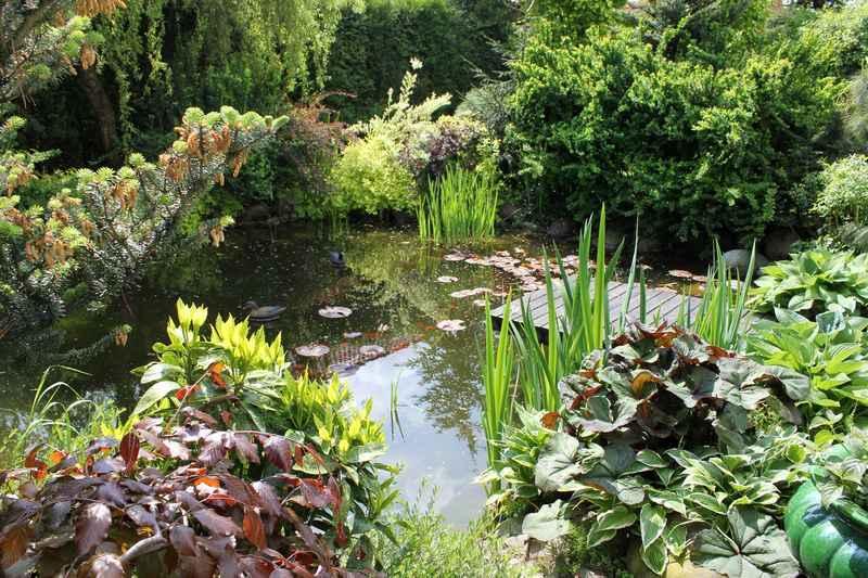 Oczko wodne w ogrodzie - sposoby wykonania oczka wodnego, wybór i  wykorzystane materiałów oraz roślin, ciekawe aranżacje