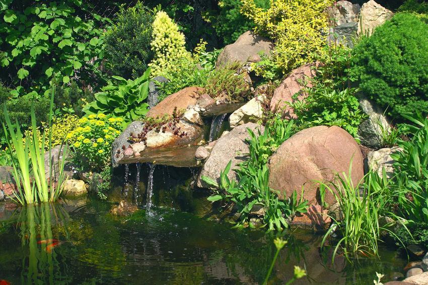 Oczko wodne w ogrodzie można zrobić samodzielnie. Instrukcja krok po kroku jak zrobić oczko wodne nie jest trudna. Wiele zależy od roślin do oczka wodnego