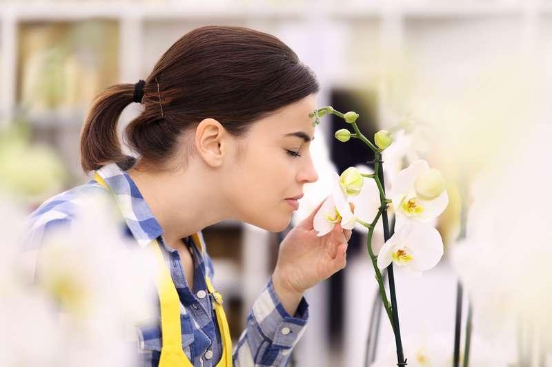 Kobieta wąchająca kwiaty storczyka, a także pielęgnacja storczyka krok po kroku, podlewanie, nawożenie, podłoże i przesadzanie