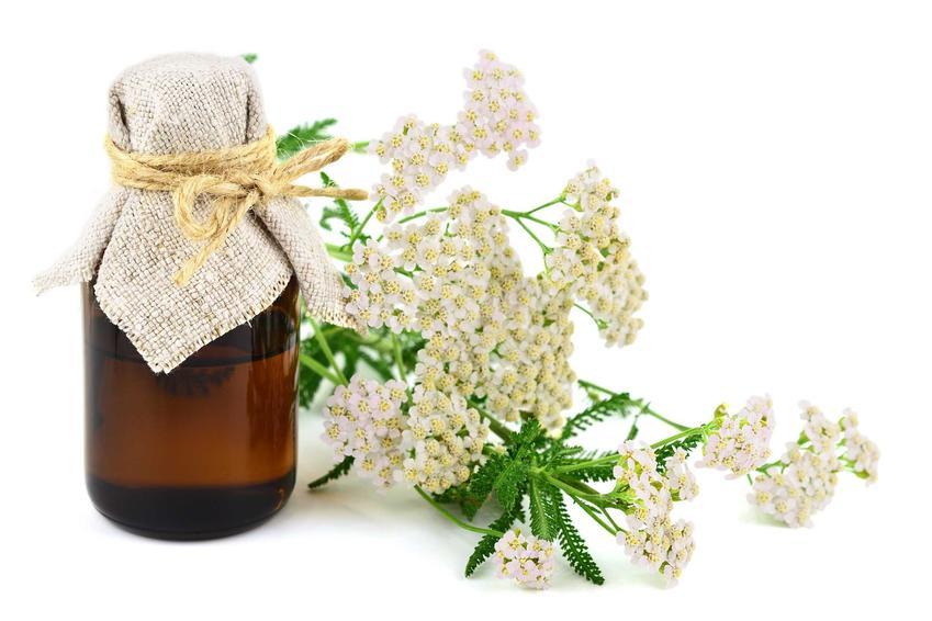 Właściwości lecznicze krwawnika są znane od wieków. Można zrobić z niego lecznice wcierki i napary, ziele zawiera także olejki eteryczne, przechowywane w szklanych buteleczkach