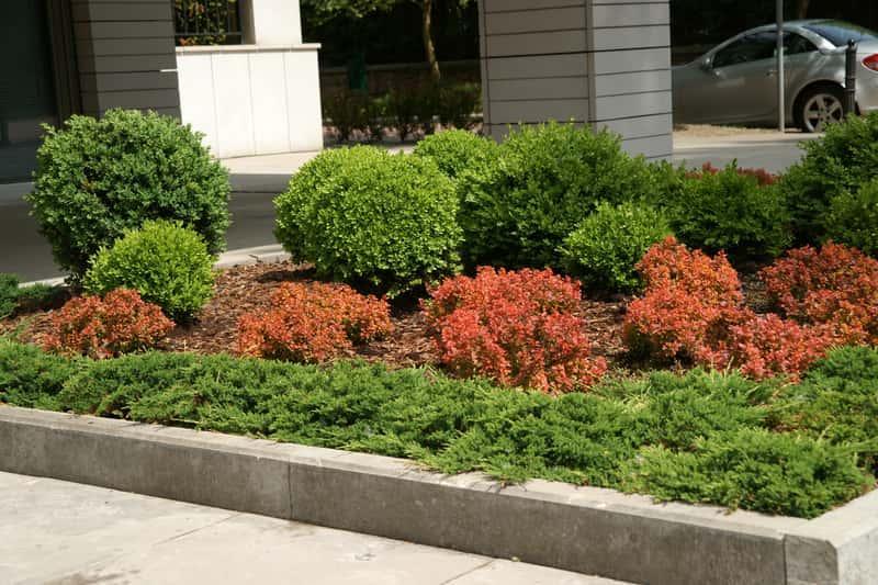 Kompozycja krzewów z jałowcem płożącym, stanowisko, warunki uprawy, sadzenie, przycinanie, pielęgnacja krzewów płożących