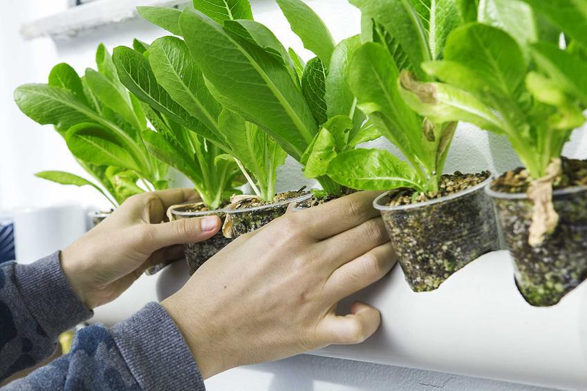 Perlit ogrodniczy ma bardzo duże, szerokie zastosowanie. Cena nie jest wysoka, a dobrze się sprawdzają w uprawie roślin.