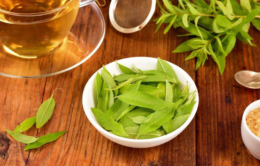 Zastosowanie werbeny cytrynowej w kuchni jest bardzo szerokie. Ma duże właściwości zdrowotne.