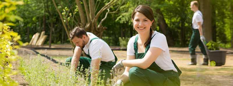 Ogrodnicy pracujący w ogrodzie, a także cennik popularnych usług ogrodniczych krok po kroku - koszt prac w ogrodzie