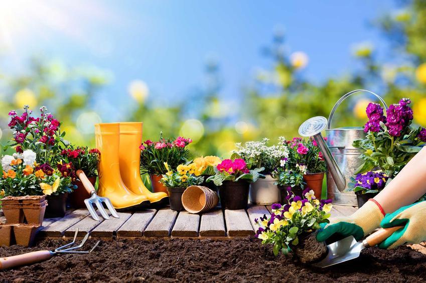 Usługi ogrodnicze zaczynają się od prac przygotowawczych i samego zakładania ogrodu, czyli sadzenia roślin i zorganizowanie rabat. Cennik zakładania ogrodu jest zróżnicowany w różnych miastach w Polsce.
