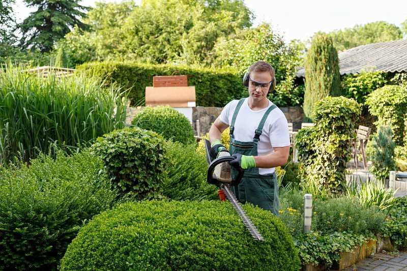 Przycinanie żywopłotów w orgodzie, kompozycje i aranżacje ogrodowe, pielęgnacja, ceny i firmy ogrodnicze