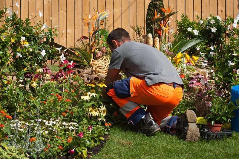 Mężczyzna pracujący przy zakładaniu ogrodu, a także cennik zakładania ogrodów oraz sadzenia roślin krok po kroku