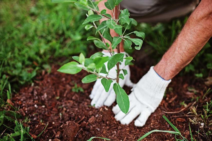 Zakładanie ogrodu zaczyna się od zaaranżowania przestrzeni i posadzenia wszystkich największych i najbardziej trwałych roślin. Cennik zakładania ogrodu może być bardzo szeroki.