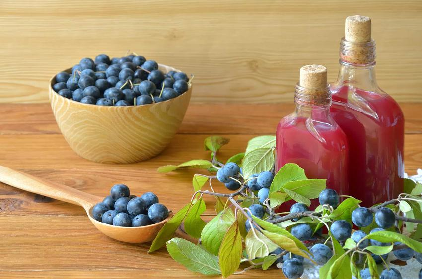 Przetwory z tarniny są nie tylko smaczne, lecz także mają właściwości lecznicze. Nalewka z tarniny ma ładny kolor i głęboki smak.
