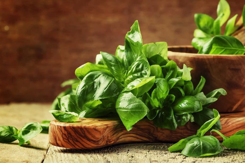 Zastosowanie bazylii w kuchni i ziołolecznictwie jest bardzo szerokie. Docenia się przede wszystkim jej niezwykły smak.