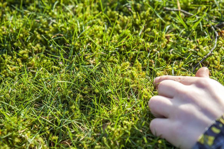 Zwalczanie mchu w trawniku i na kostce brukowej - sprawdzone sposoby