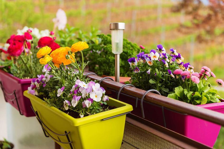 Kompozycje kwiatowe w doniczkach są bardzo atrakcyjne. Można połączyć kolory i różne formy kwiatów - wzniesione i płożące, które wspaniale się prezentują.