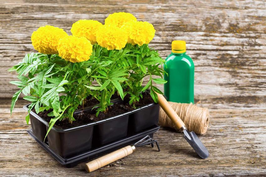Biohumus to naturalny preparat, który nadaje się do zastosowania w wielu uprawach. Dawkowanie jest zróżnicowane ze względu na rodzaj i wielkość rośliny