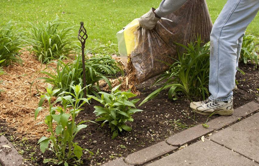 Świeża kora do ogrodu to sposób na ochronę roślin przed gorącem, brakiem wody i niskimi temperaturami. Na dodatek powstrzymują wzrost hwastów. Zastosowanie kory w ogrodzie jest także dekoracyjne