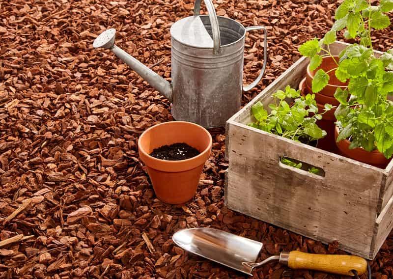 Wykorzystanie kory w ogrodzie i rabatach kwiatowych  -  rodzaje, gatunki, ceny oraz zastosowanie - porady