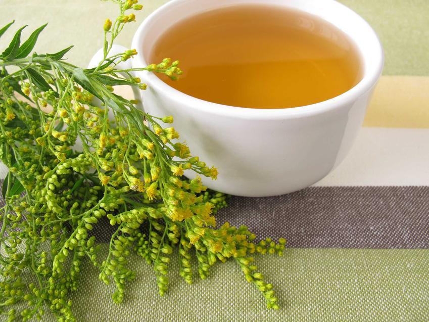 Nawłoć pospolita to jedna z roślin o najlepszym działaniu leczniczym i prozdrowotnym. Jest smaczna i przepięknie wygląda, a miód z nawłoci jest smaczny.