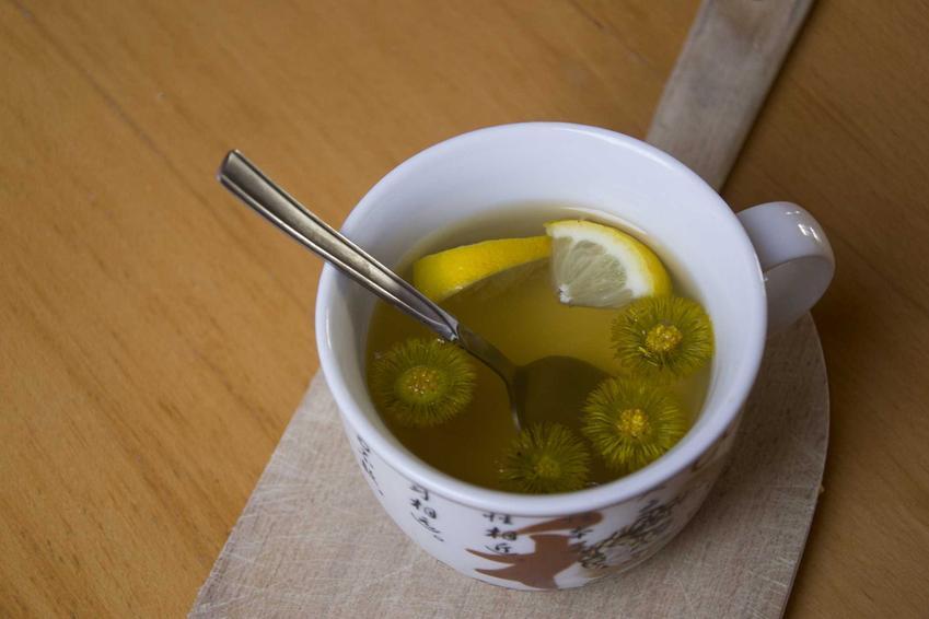 Zastosowanie podbiału jest bardzo szeroka. Herbata z podbiału ma ogromne właściwości lecznicze, przygotowuje się ją z kwiatów podbiału