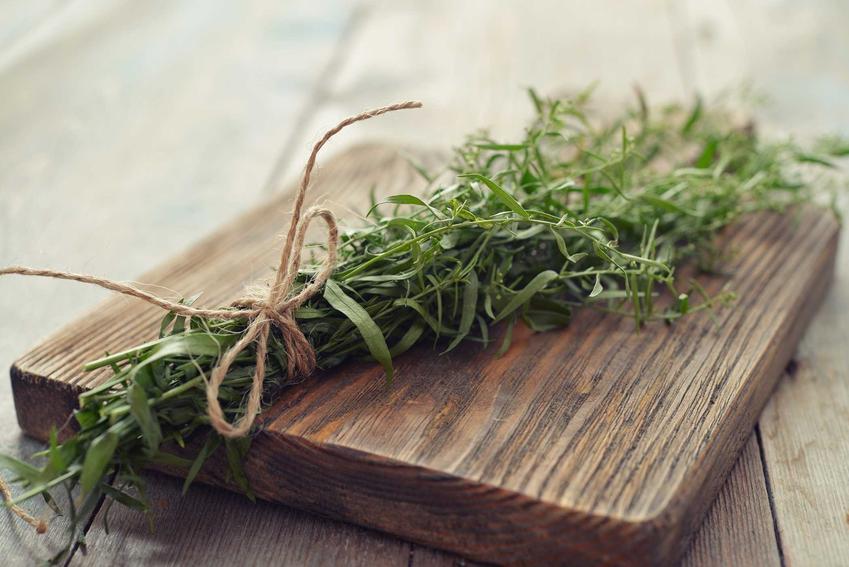 Bylica estragon to jedna z najlepszych ziół i przypraw, dobrze się sprawdza do bardzo wielu potraw różnego rodzaju, ma właściwości lecznicze.