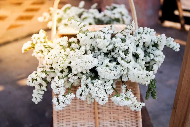 Gipsówka o drobnych białych kwiatuszkach w koszyku, a także najbardziej popularne odmiany, uprawa oraz pielęgnacja