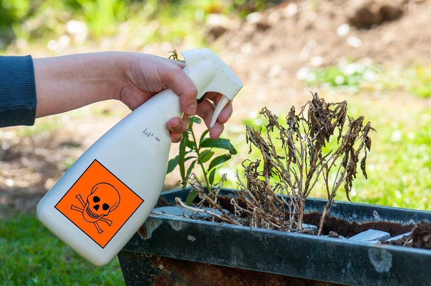 Opryski herbicydami czasami są koniecznością. To najlepszy sposób na usunięcie wszystkich chwastów, bardzo szybko to działa.