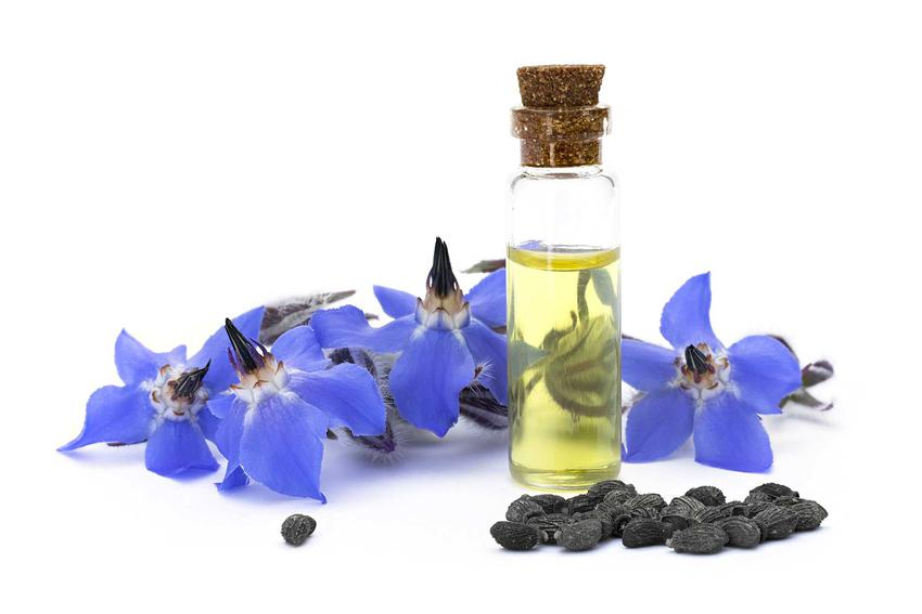Olej z ogórecznika ma duże właściwości lecznicze i bardzo szerokie zastosowanie, zwłaszcza w kosmetyce i ziołolecznictwie różnego rodzaju