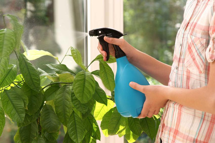 Domowe sposoby na mszyce - preparaty na oprysk w ogrodzie