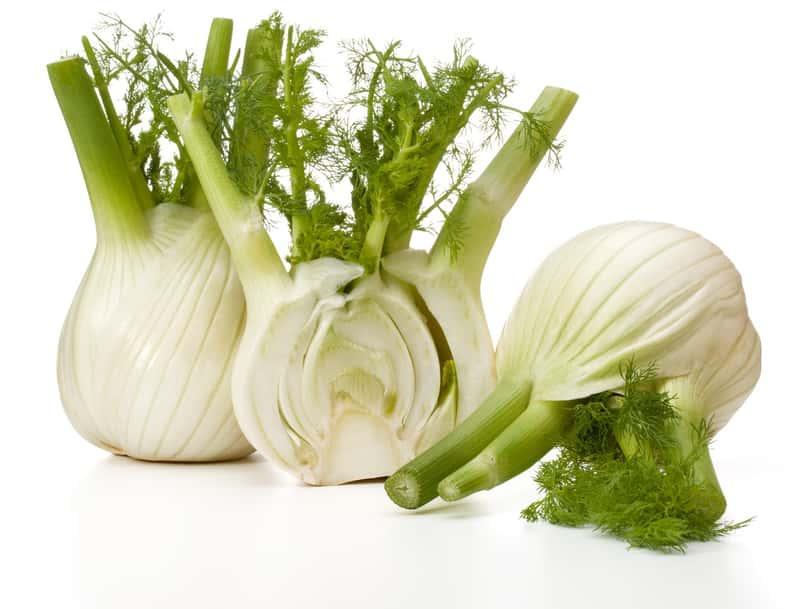 Koper włoski (fenkuł) - opis, warunki uprawy, wymagania, pielęgnacja oraz właściwości lecznicze i zastosowanie